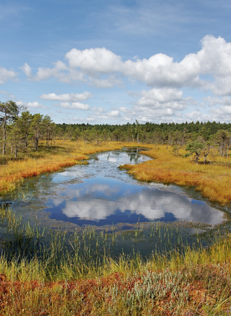 bog: View to the lake in the bog. Stock Photo