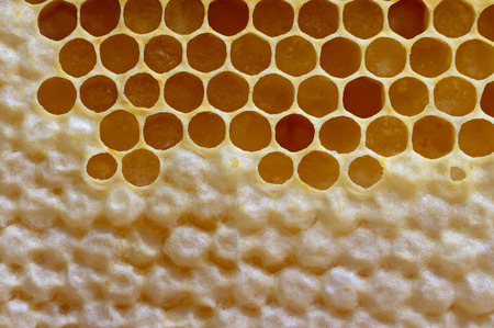 uncompleted: Natural completed and uncompleted honeycombs. Stock Photo
