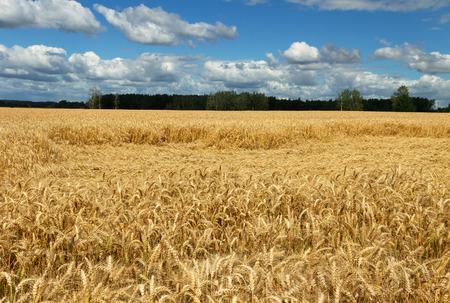 hospedaje: oin campo de trigo alojamiento.