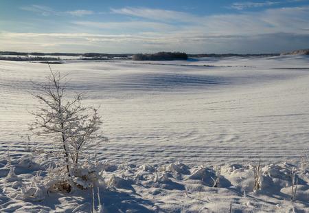 countryside landscape: Countryside  landscape in winter. Stock Photo