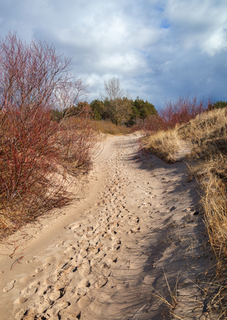 Sand dunes with grass on beach. Stock Photo