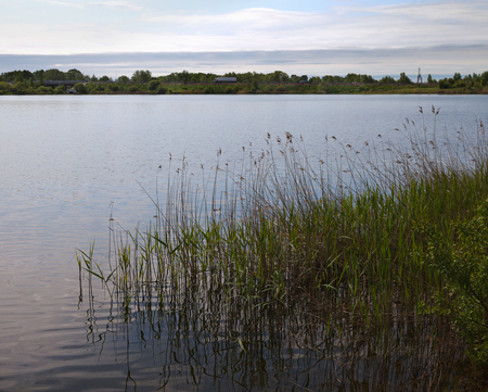 Coast of the lake with grasses.