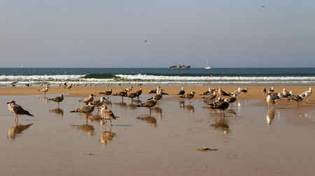 Flock of seagulls on the beach. Banque d'images