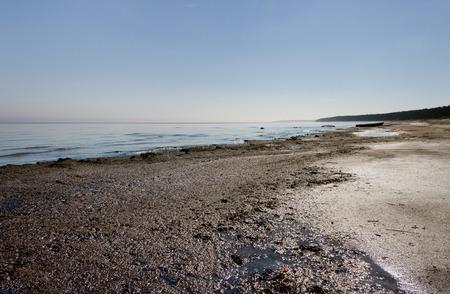 Coast of Baltic sea with seaweed.