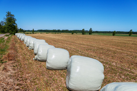 Silage wrapped in a white membrane, food for cows. Stockfoto