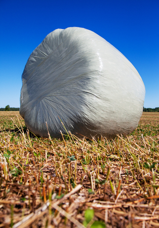 Silage wrapped in a white membrane, food for cows.