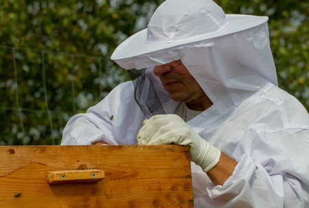 Apiarist is working in his apiary