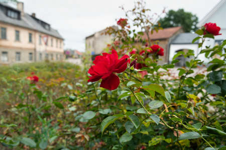 View to flower yard in old small town.