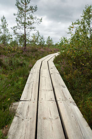View to wooden pathway in a bog.