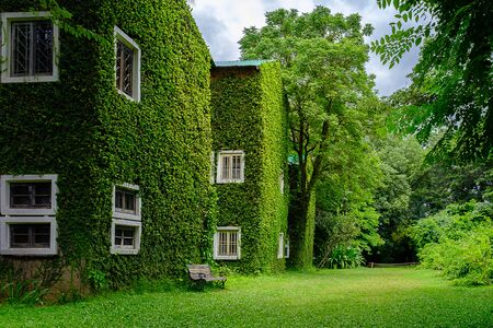 녹색 담쟁이로 덮인 건물