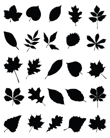 Silhouettes of foliage-vector illustration Stock Vector - 21908311