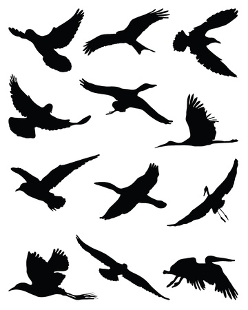 Silhouettes of birds in flight-vector Stock Vector - 21908316