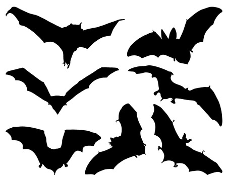 suck blood: Silhouettes  of bats, vector
