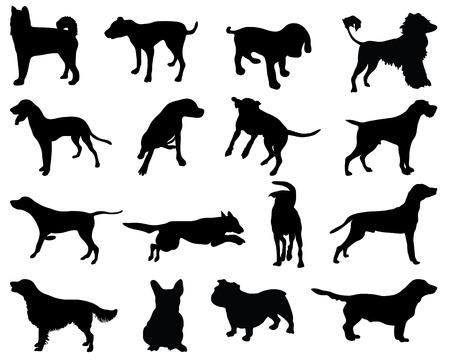 husky puppy: dog