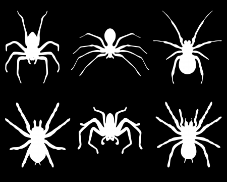 spidery: White  silhouettes of spiders on black background, vector Illustration