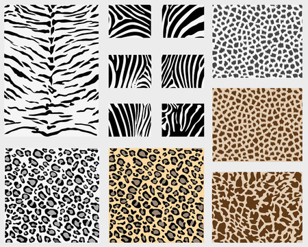 Illustration of detailed different animal skins  Vector