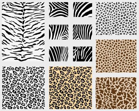 Illustration of detailed different animal skins  Vector