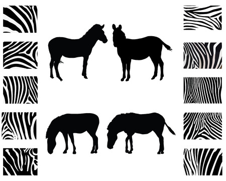 striking: Silhouette of zebra and print of skin, vector