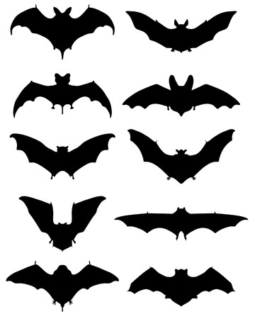 suck blood: Black silhouettes of different bats illustration