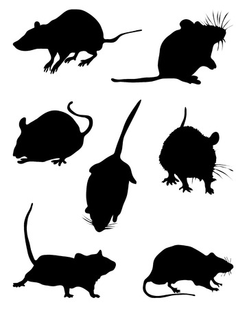 rata: Siluetas negras de mouses, vector