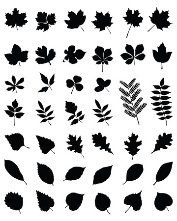 beech: Silhouettes of foliage-vector