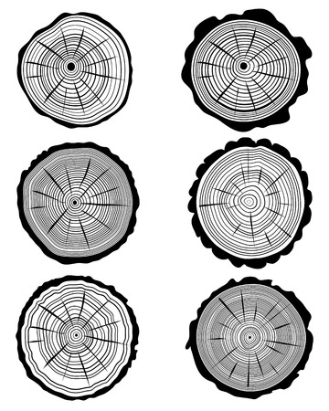rings on a tree: Cross section of the trunk 2, vector illustration