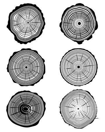 Cross section of the trunk, vector illustration Vettoriali
