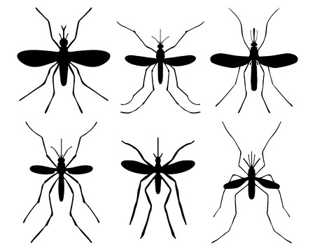 disease carrier: Black silhouettes of mosquito