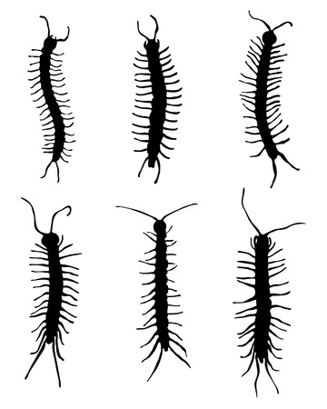 centipede: Black silhouettes of millipedes