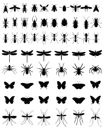 arthropods: Black silhouettes of insects on white background, vector