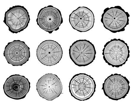Set di sezione trasversale del tronco, illustrazione Archivio Fotografico - 31398168