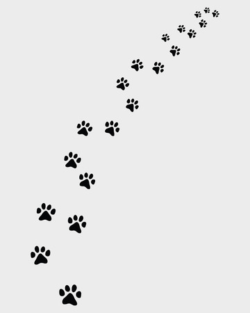 Footprints of cat, turn right-vector illustration