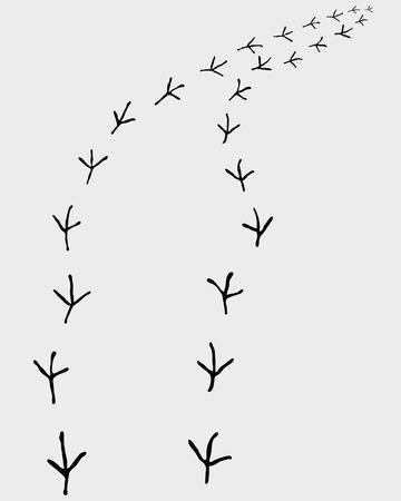 walking trail: Black trail of birds, turn right, vector illustration Illustration