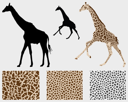Silhouette of giraffes and detailed skin, vector illustration Illustration