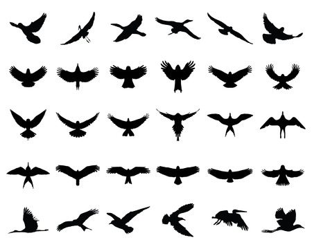 birds in flight: Black silhouettes of birds in flight, vector