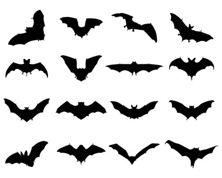 suck blood: Black silhouettes of different bats, vector