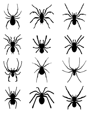 arthropods: Black silhouettes of different spiders, vector