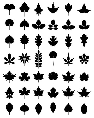 beech: Black silhouettes of leaves of trees, vector
