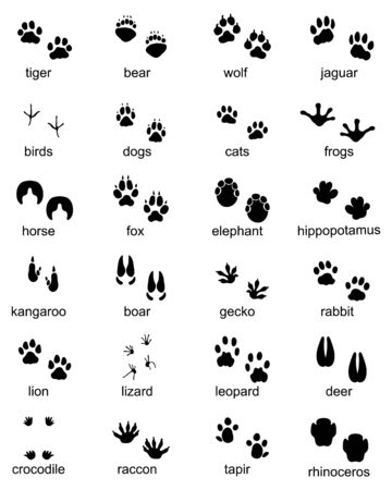 Set of footprints of wild animals, illustration of black silhouette Illustration