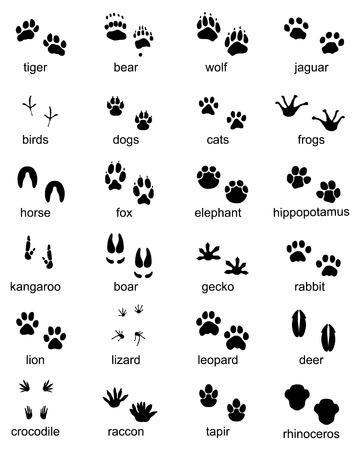 Conjunto de huellas de animales salvajes, ilustración de silueta negra