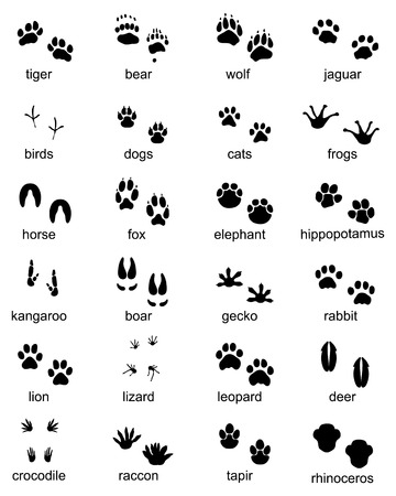 Set of footprints of wild animals, illustration of black silhouette Vectores