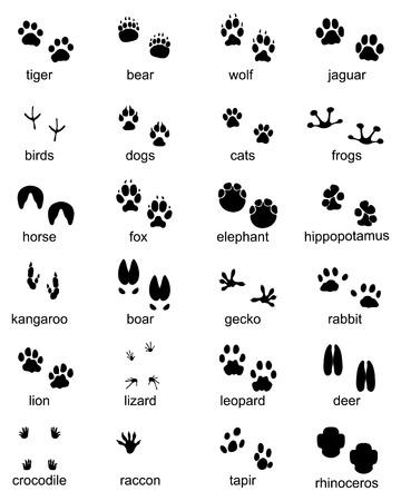 Set of footprints of wild animals, illustration of black silhouette Ilustração Vetorial