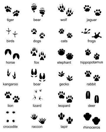 Set of footprints of wild animals, illustration of black silhouette Vektorgrafik