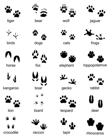 Set of footprints of wild animals, illustration of black silhouette Archivio Fotografico - 132368847