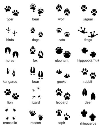 Set of footprints of wild animals, illustration of black silhouette Archivio Fotografico - 132368848