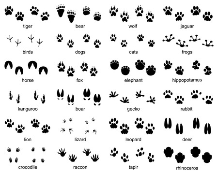 Set of footprints of wild animals, illustration of black silhouette Ilustração