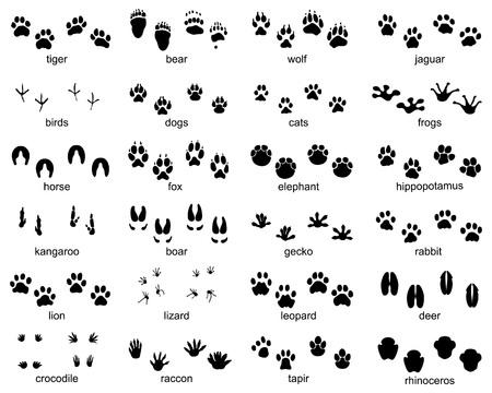 Conjunto de huellas de animales salvajes, ilustración de silueta negra Ilustración de vector