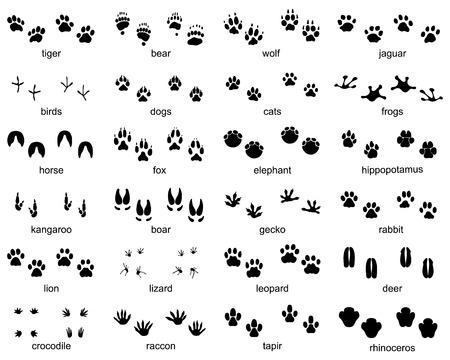 Conjunto de huellas de animales salvajes sobre un fondo blanco.