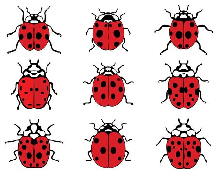Set of different cheerful ladybugs, vector illustration