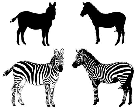 Silhouettes of zebras on a white background